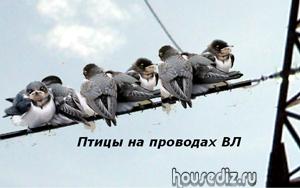 Птицы на проводах ВЛ