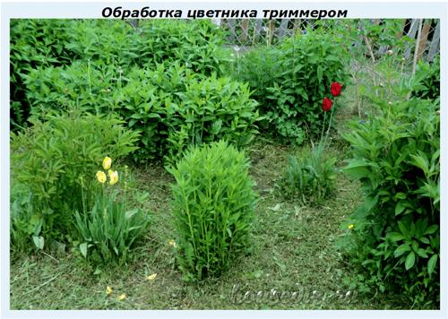 Обработка цветника триммером