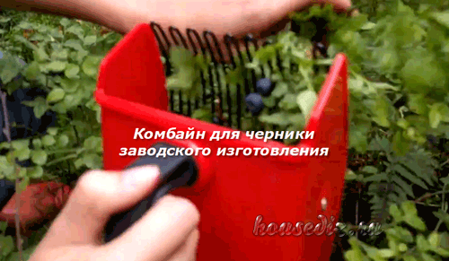 Комбайн для черники заводского изготовления