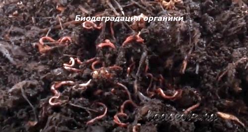 Биодеградация